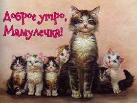 Доброе утро, мамулечка! Красивая лучшая бесплатная открытка с поздравлением маме с добрым утром! Красивая лучшая бесплатная открытка с поздравлением для мамы доброе утро! Красивая лучшая бесплатная открытка с поздравлением с котами для мамы с пожеланием доброго утра! Печать открытки! скачать открытку бесплатно | pozdravok.qwestore.com