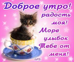 Красивая лучшая бесплатная открытка с поздравлением с добрым утром! Кот в чашке вместо кофе))! Открытка добра! скачать открытку бесплатно | pozdravok.qwestore.com