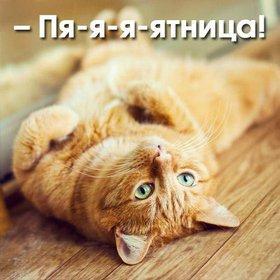 Красивая лучшая бесплатная открытка с поздравлением с котом на тему Ура, пятница. Скачать красивые открытки бесплатно онлайн прямо сейчас! скачать открытку бесплатно   pozdravok.qwestore.com