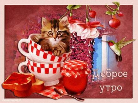 Доброе утро, котенок! Красивая лучшая бесплатная открытка с поздравлением самым близким! Красивые открытки бесплатно! скачать открытку бесплатно | pozdravok.qwestore.com