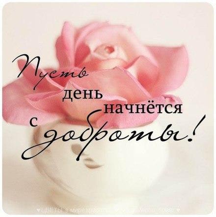 Красивая лучшая бесплатная открытка с поздравлением Пусть день начинается с доброты! Роза. Красивые открытки бесплатно! скачать открытку бесплатно | pozdravok.qwestore.com