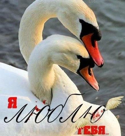 Красивая лучшая бесплатная открытка с поздравлением, лучшая бесплатная открытка с поздравлением, сердце, сердечко, красивая лучшая бесплатная открытка с поздравлением любовь, красивая лучшая бесплатная открытка с поздравлением с любовью, I love you, люблю тебя, Love, красивая лучшая бесплатная открытка с поздравлением с сердечками, красивая лучшая бесплатная открытка с поздравлением для любимой, красивая лучшая бесплатная открытка с поздравлением для любимого, лебеди. Открытки  Красивая лучшая бесплатная открытка с поздравлением, лучшая бесплатная открытка с поздравлением, сердце, сердечко, красивая лучшая бесплатная открытка с поздравлением любовь, красивая лучшая бесплатная открытка с поздравлением с любовью, I love you, люблю тебя, Love, красивая лучшая бесплатная открытка с поздравлением с сердечками, красивая лучшая бесплатная открытка с поздравлением для любимой, красивая лучшая бесплатная открытка с поздравлением для любимого, красивая лучшая бесплатная открытка с поздравлением признание в любви скачать бесплатно онлайн! Скачать красивую картинку на праздник онлайн! скачать открытку бесплатно   pozdravok.qwestore.com