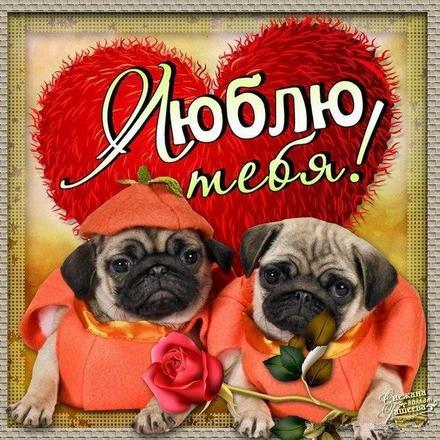 Красивая лучшая бесплатная открытка с поздравлением, лучшая бесплатная открытка с поздравлением, любовь, признание в любви, люблю тебя, красивая лучшая бесплатная открытка с поздравлением любовь, для любимых. Открытки  Красивая лучшая бесплатная открытка с поздравлением, лучшая бесплатная открытка с поздравлением, любовь, признание в любви, люблю тебя, красивая лучшая бесплатная открытка с поздравлением любовь, для любимых, сердечко скачать бесплатно онлайн! Скачать красивые картинки быстро можно здесь! скачать открытку бесплатно | pozdravok.qwestore.com